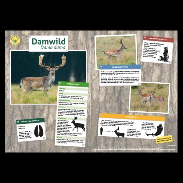 Lernort Natur-Tiertafel DIN A3 Damwild