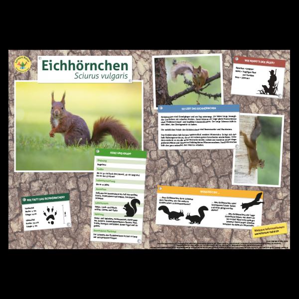 Lernort Natur-Tiertafel DIN A3 Eichhörnchen