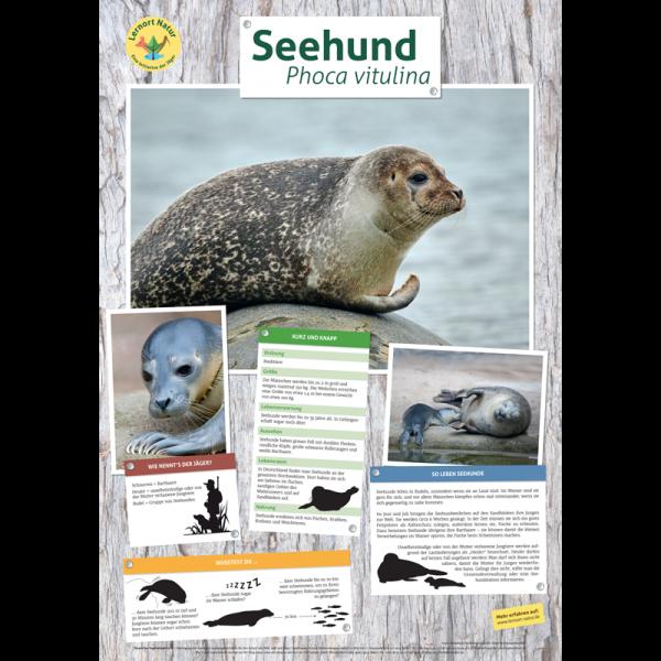 Lernort Natur-Tierposter Seehund