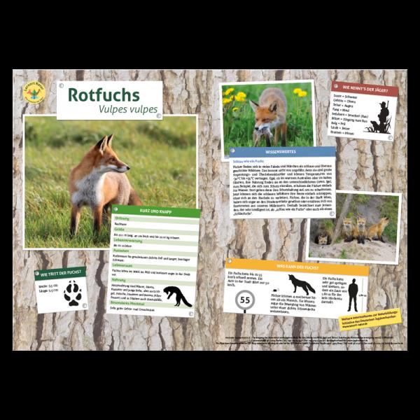 Lernort Natur-Tiertafel DIN A3 Rotfuchs