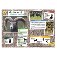 Lernort Natur-Tiertafel DIN A3 Muffelwild