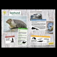 Lernort Natur-Tiertafel DIN A3 Seehund
