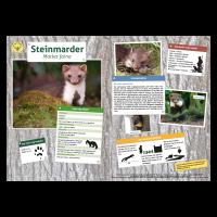 Lernort Natur-Tiertafel DIN A3 Steinmarder