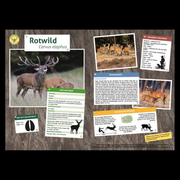 Lernort Natur-Tiertafel DIN A3 Rotwild