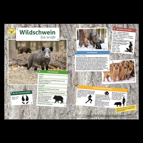Lernort Natur-Tiertafel DIN A3 Wildschwein
