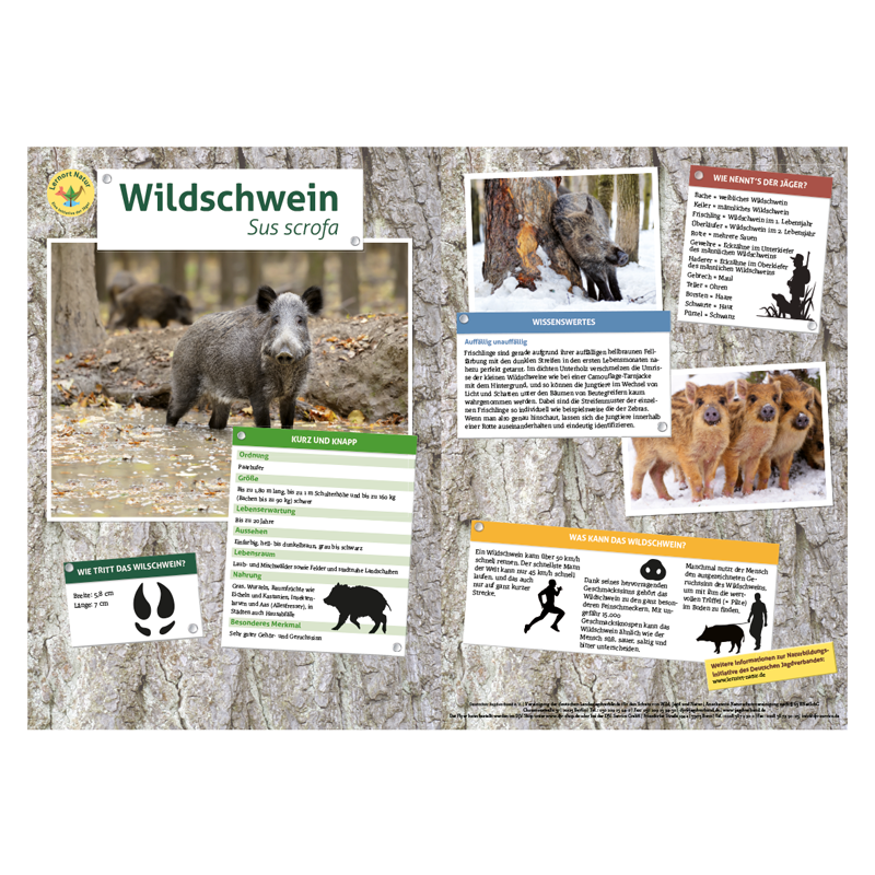 Partnersuche fur jagd und naturfreunde