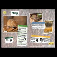 Lernort Natur-Tiertafel DIN A3 Maus