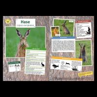 Lernort Natur-Tiertafel DIN A3 Hase