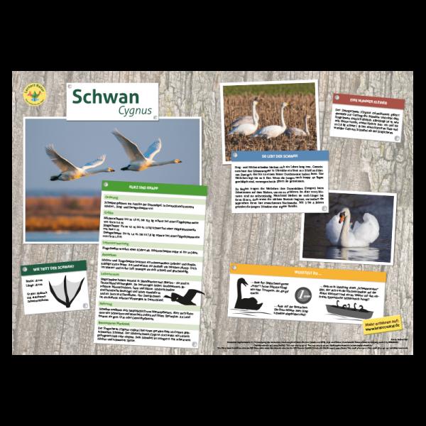 Lernort Natur-Tiertafel DIN A3 Schwan
